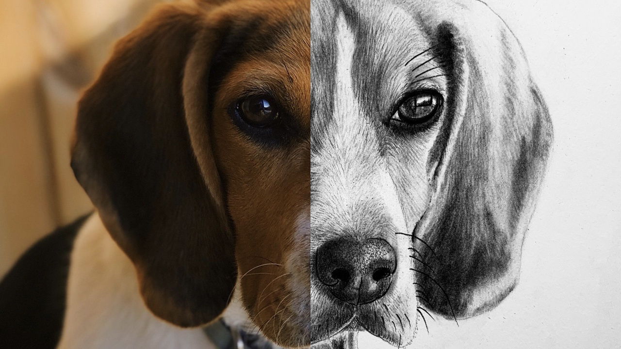 How to Draw a Beagle   Step by Step Tutorial