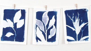 Cyanotypes: Introduction to Botanical Art Prints - Create Ready to Hang Art