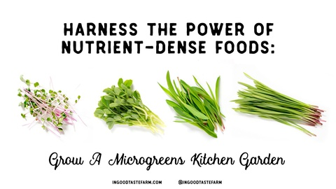 Harness The Power of Nutrient-Dense Foods