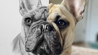 How to Draw a French Bulldog | Step by Step Tutorial