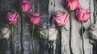 Still Life Photography: Creating A Beautiful Rose Flat lay Photo