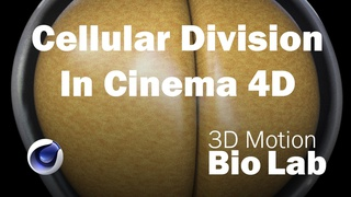 Cellular Division with Fields and the Volume Builder in Cinema 4D