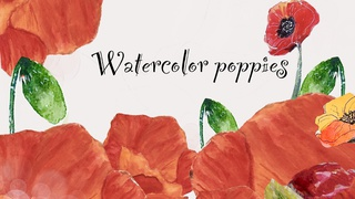 Watercolor Poppies   Buds To Flowers