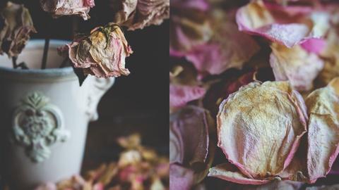 Still Life Photography: Creating A Dark & Moody Flower Setup